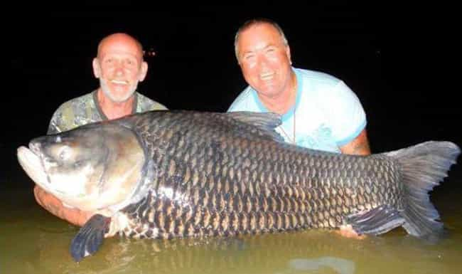 The Fish They Caught Was A Rec... is listed (or ranked) 4 on the list Two Dudes Used Their Dead Best Friend's Ashes As Bait And Caught The World's Biggest Carp