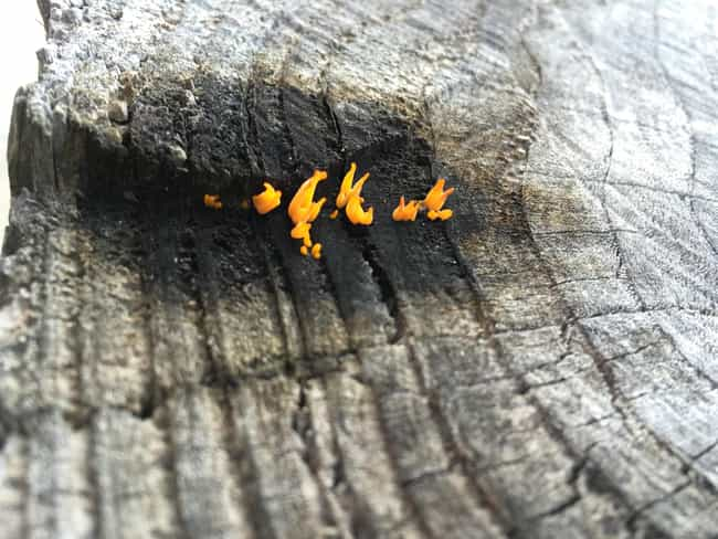 "The Everlasting Flame Fungus is listed (or ranked) 4 on the list People On The Internet Are Posting Photos Of ""Mildly Interesting"" Things And They're Actually Cool"