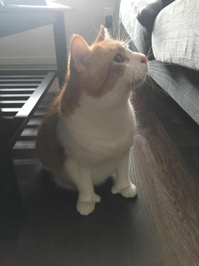 """This Cat With Thumbs Is ... is listed (or ranked) 7 on the list People On The Internet Are Posting Photos Of """"Mildly Interesting"""" Things And They're Actually Cool"""