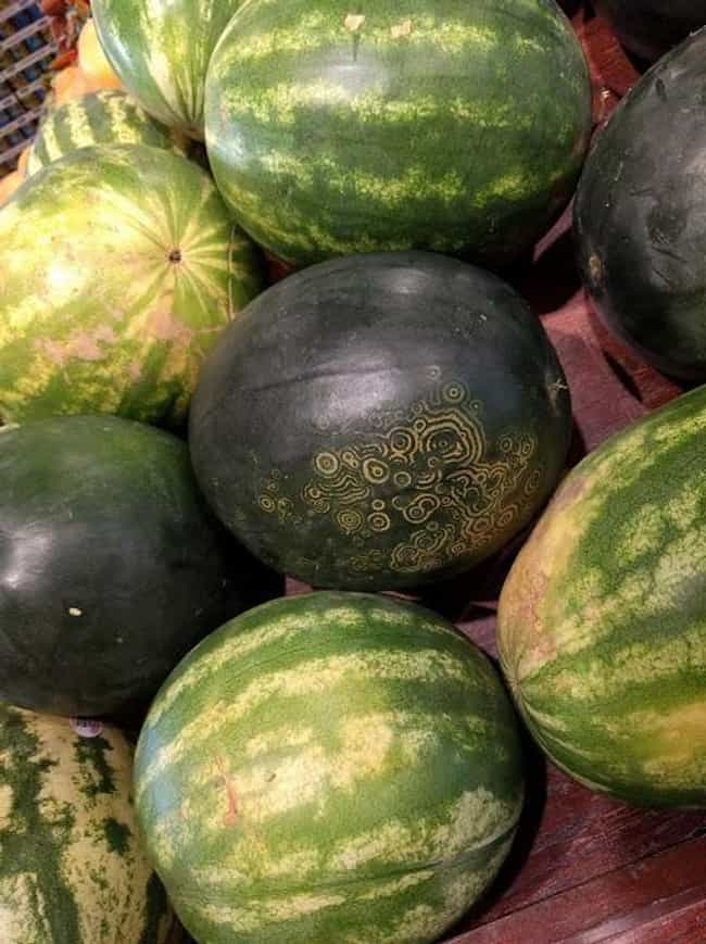 """This Watermelon Is Not L... is listed (or ranked) 8 on the list People On The Internet Are Posting Photos Of """"Mildly Interesting"""" Things And They're Actually Cool"""