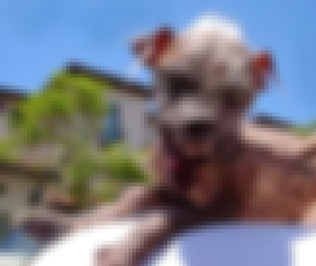 Sam, Winner 2003-2005 is listed (or ranked) 1 on the list These Are Some Winners Of The World's Ugliest Dog Contest