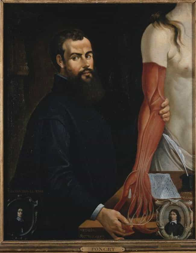 Vesalius Ripped Off Skin To Sh... is listed (or ranked) 3 on the list In The 16th-Century, People Watched Bodies Being Dissected The Way We Watch Movies Now
