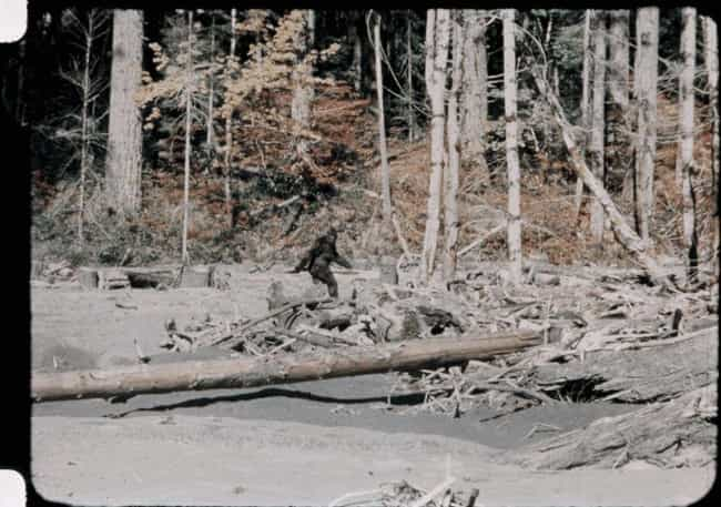 Patterson And Gimlin Wer... is listed (or ranked) 1 on the list Is The Most Notorious Bigfoot Footage Ever A Hoax...Or Is It The Real Deal