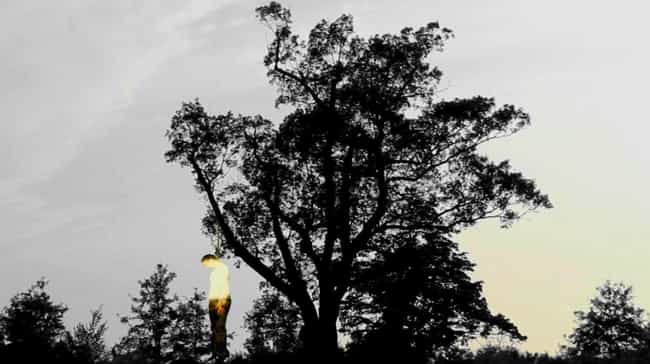 "Ghostly ""Strange Fr... is listed (or ranked) 1 on the list There Is Compelling Evidence The ""Devil's Tree"" In New Jersey Is Actually Cursed And Very Dangerous"