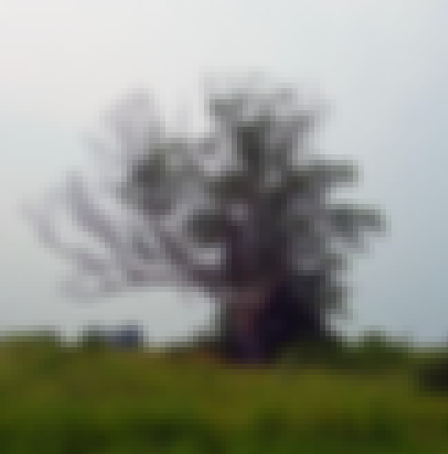 """The Tree Is Very Powerful is listed (or ranked) 2 on the list There Is Compelling Evidence The """"Devil's Tree"""" In New Jersey Is Actually Cursed And Very Dangerous"""