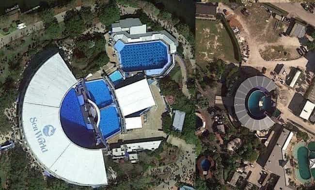 Her Tank Is Just Four Times Th... is listed (or ranked) 2 on the list Lolita The Lonely Orca Has Been Forced To Live In The Country's Smallest Whale Tank For 45 Years