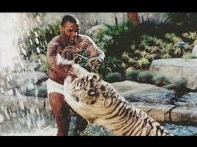 Some People Have Cats For Pets... is listed (or ranked) 1 on the list How Mike Tyson Made $400 Million Yet Still Declared Bankruptcy