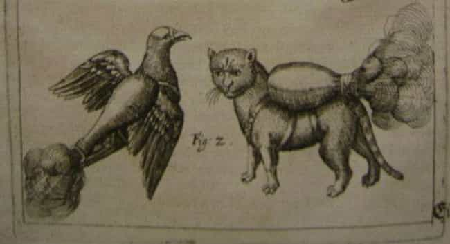 At First, The Discovery Of The... is listed (or ranked) 4 on the list Why Are These 16th-Century Cats Wearing Jetpacks?