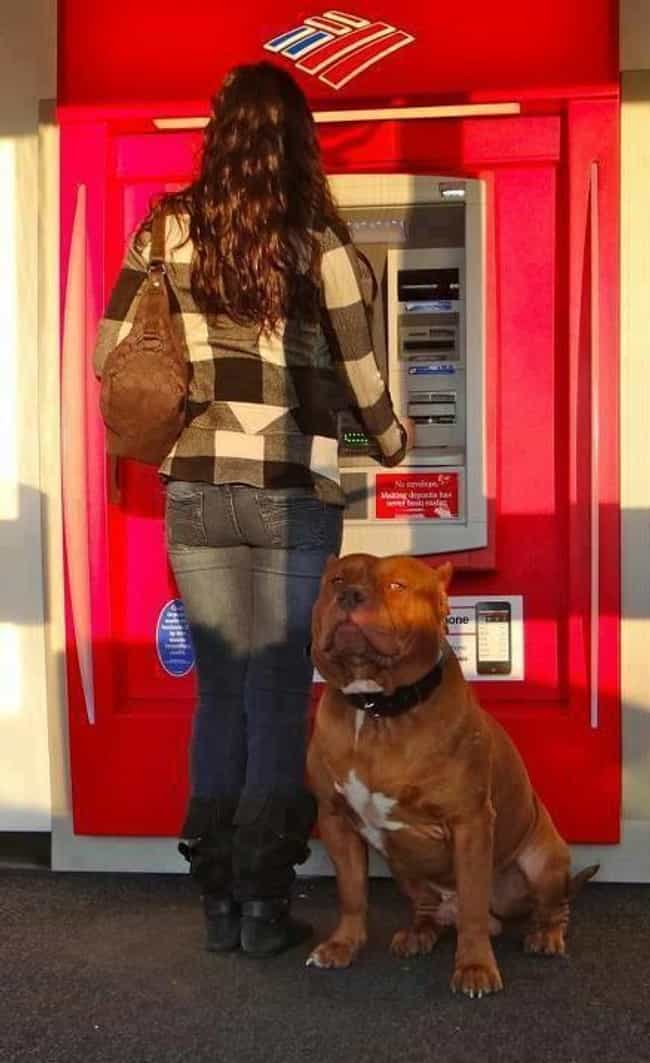 """The """"General"""" Only Tak... is listed (or ranked) 1 on the list People Are Using Their Dogs As Guards When At The ATM And It's As Funny As It Is Fierce"""