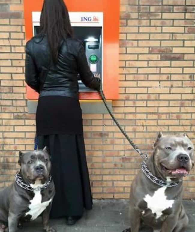 Will Protect For Belly Rubs, T... is listed (or ranked) 4 on the list People Are Using Their Dogs As Guards When At The ATM And It's As Funny As It Is Fierce