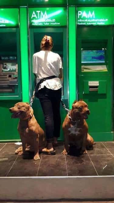 They Have Their Owner's Ba is listed (or ranked) 2 on the list People Are Using Their Dogs As Guards When At The ATM And It's As Funny As It Is Fierce