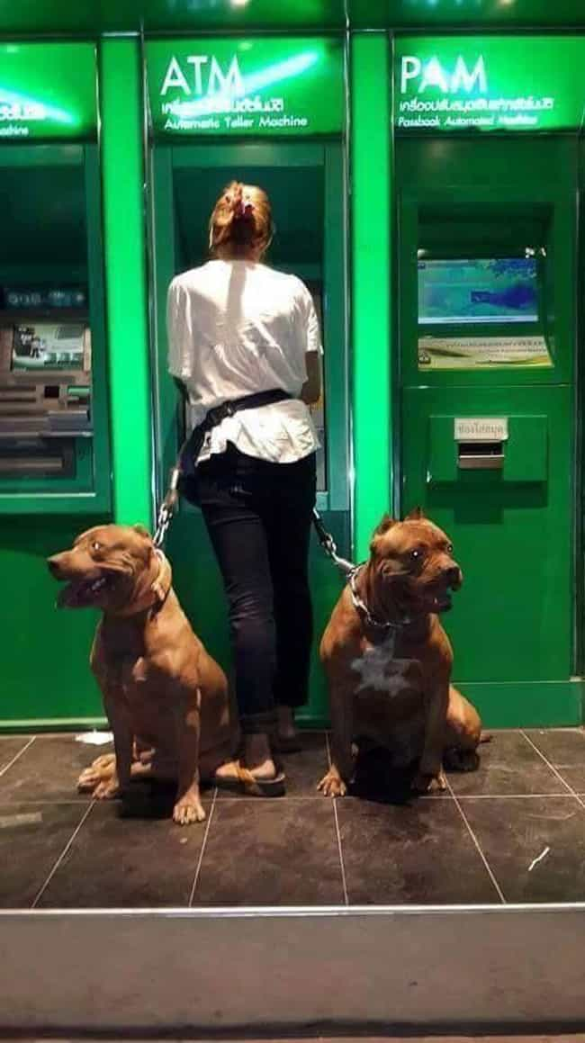 They Have Their Owner's Ba... is listed (or ranked) 3 on the list People Are Using Their Dogs As Guards When At The ATM And It's As Funny As It Is Fierce