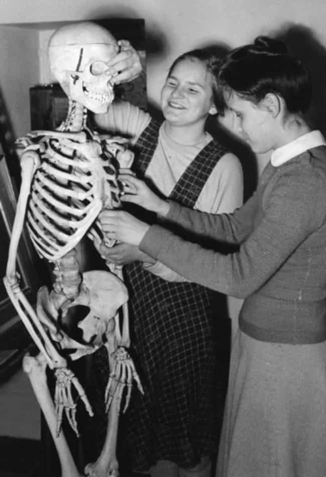 Gruesome Ways Scientists Got The Skeletons Out Of Human Bodies