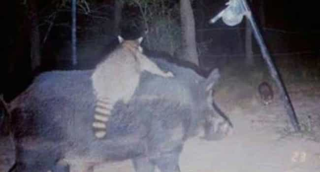 17 Times Trail Cams Revealed The Hilarious, Hidden Lives Of Animals