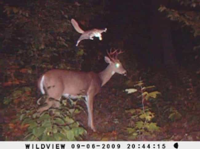 Ninja Attack! is listed (or ranked) 2 on the list 17 Times Trail Cams Revealed The Hilarious, Hidden Lives Of Animals