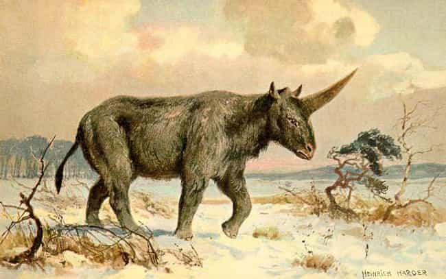 Scientists Proved 'Unico... is listed (or ranked) 1 on the list Unicorn-Like Animals Existed 29,000 Years Ago And They Were Pretty Scary