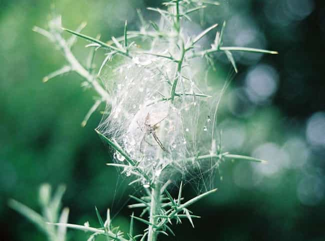 The Itsy Bitsy Spider Bu... is listed (or ranked) 3 on the list Incredible Animal Nests That Are Better Than Your Studio Apartment