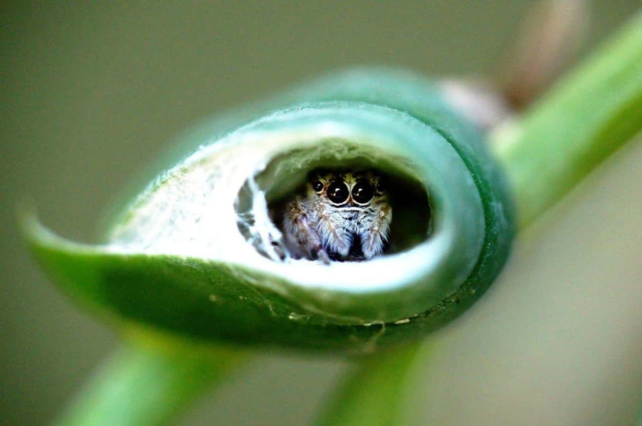 Just Hiding Out In Its Little  is listed (or ranked) 1 on the list Cute Lil' Spiders That'll Cure Your Arachnophobia