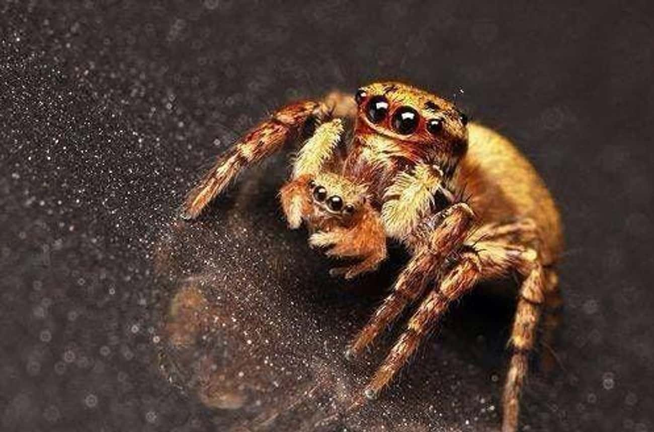 'I Made This' is listed (or ranked) 2 on the list Cute Lil' Spiders That'll Cure Your Arachnophobia