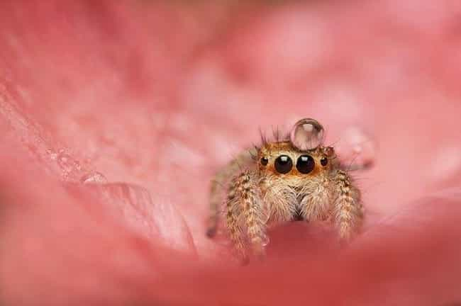 Just An Itsy Spider With A Bit... is listed (or ranked) 1 on the list Cute Lil' Spiders That'll Cure Your Arachnophobia