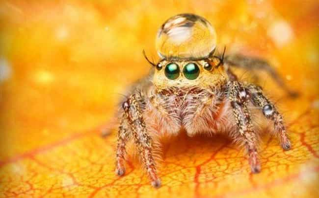 Cute Lil Spiders Thatll Cure Your Arachnophobia