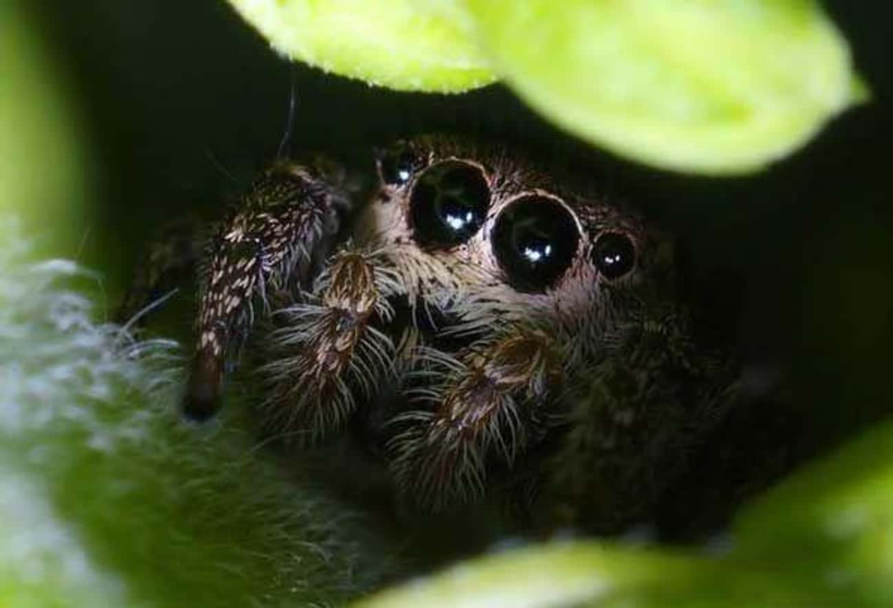 Hiding From All The Big, Mean  is listed (or ranked) 3 on the list Cute Lil' Spiders That'll Cure Your Arachnophobia