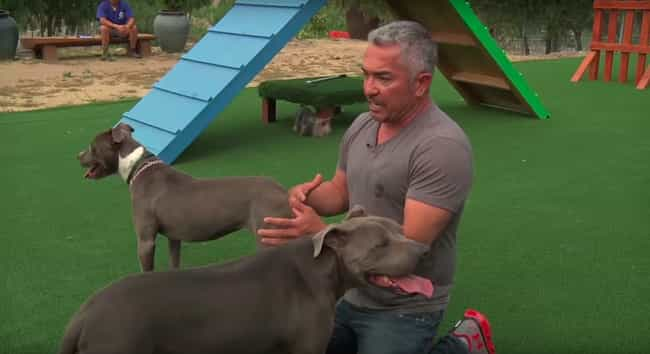Many Experts Say His Technique... is listed (or ranked) 4 on the list The Dog Whisperer Is Full Of Hogwash And You Shouldn't Take His Advice