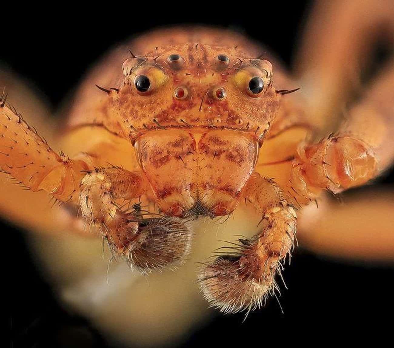 For A Crabby Spider, This One  is listed (or ranked) 2 on the list Captivating And Creepy Close-Ups Of Spider Faces