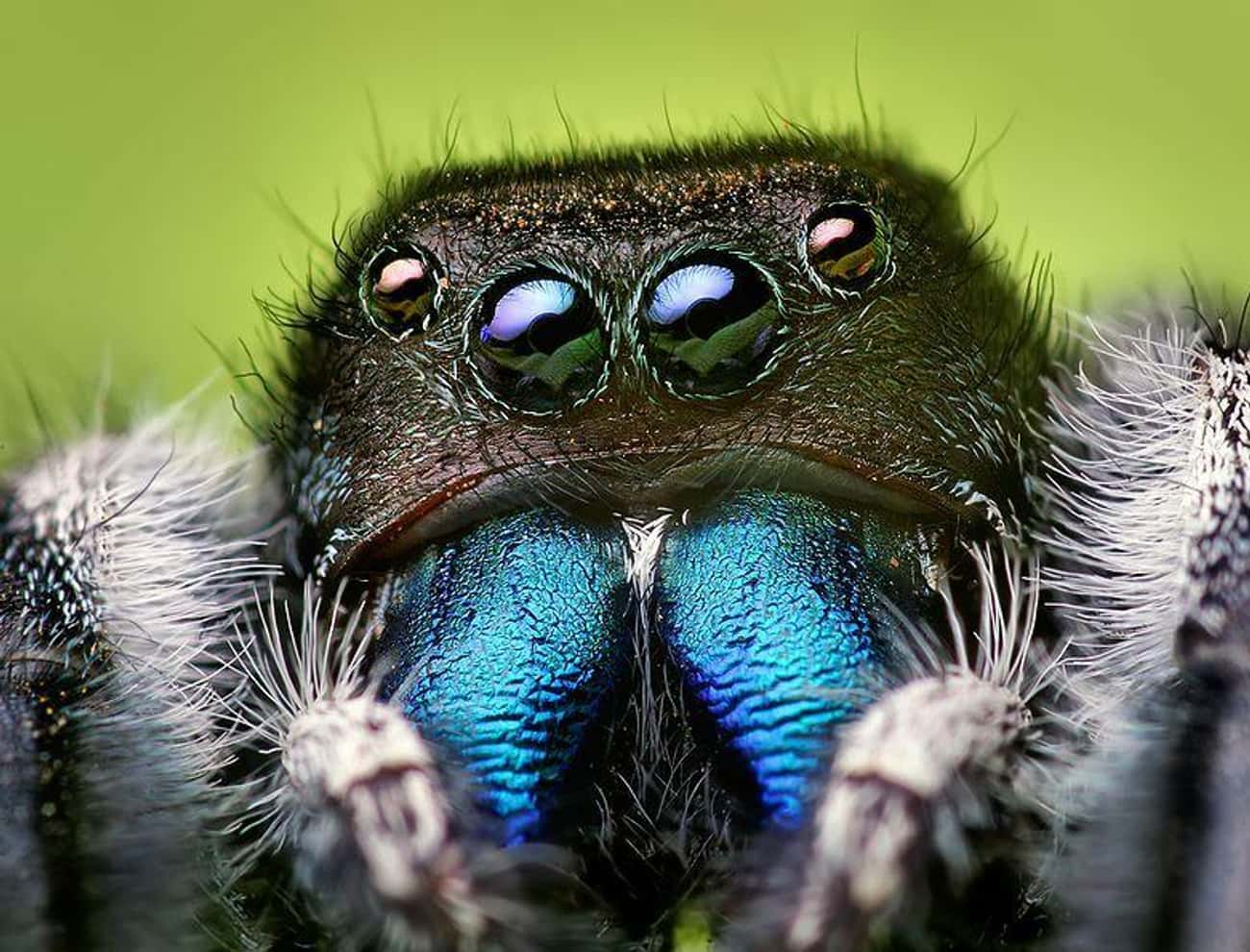 They're Clearly Plotting T is listed (or ranked) 4 on the list Captivating And Creepy Close-Ups Of Spider Faces