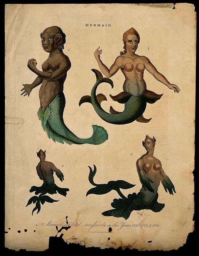 Christopher Columbus Spotted A... is listed (or ranked) 2 on the list People From History Who Claimed To Have Encountered Mermaids (And Their Evidence)