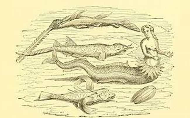 NOAA Might Say Mermaids Aren't... is listed (or ranked) 13 on the list People From History Who Claimed To Have Encountered Mermaids (And Their Evidence)
