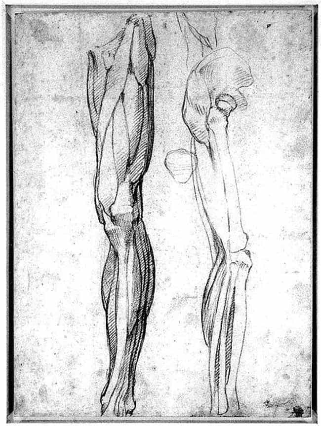 Turns Out Michelangelo And Da Vinci Trafficked Dead Bodies For Their Art