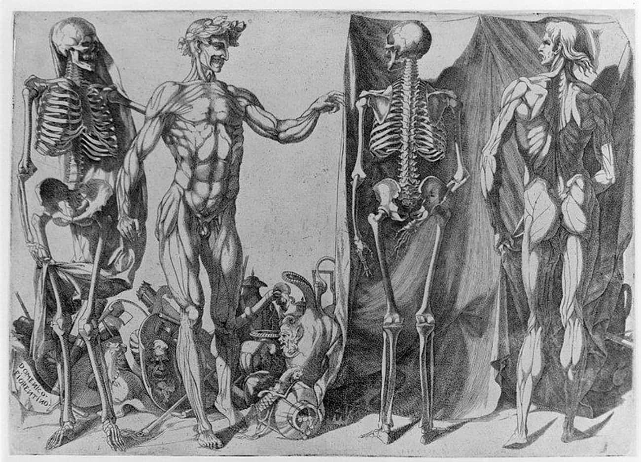 Renaissance Artists Had To Loo is listed (or ranked) 1 on the list Turns Out Michelangelo And Da Vinci Trafficked Dead Bodies For Their Art
