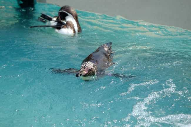 Grape-kun Had A Pretty N... is listed (or ranked) 1 on the list The Sweet And Tragic Tale Of Grape-kun The Penguin