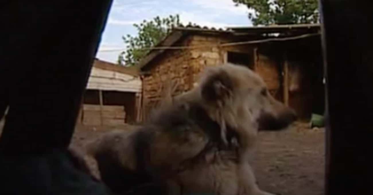 After Five Years With Her Dog Pack, The Animals Tried To Protect Her From Authorities