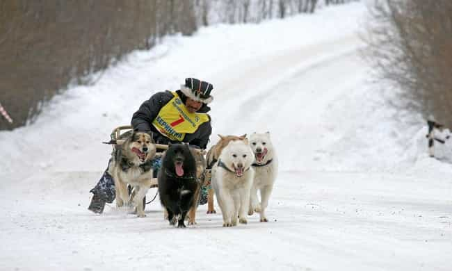 The Pressure To Break Records ... is listed (or ranked) 4 on the list The Most Famous Dog Sled Race, The 1,000 Mile Iditarod, Has A Major Dark Side