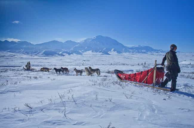The 1,100 Mile Trek Is A Bruta... is listed (or ranked) 1 on the list The Most Famous Dog Sled Race, The 1,000 Mile Iditarod, Has A Major Dark Side