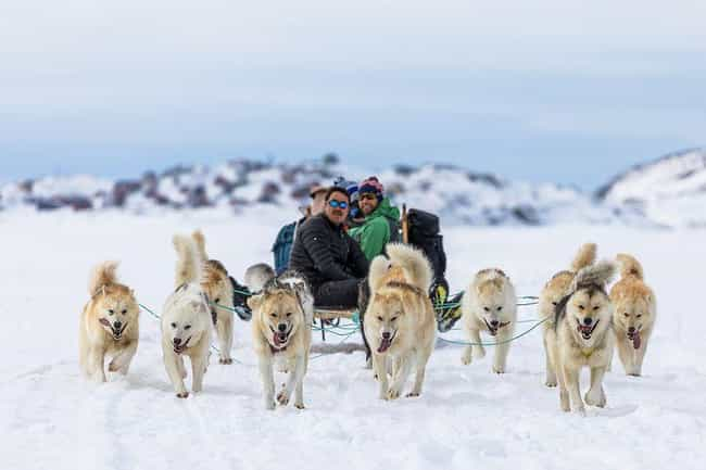 Dozens Of Dogs Have Died Durin... is listed (or ranked) 2 on the list The Most Famous Dog Sled Race, The 1,000 Mile Iditarod, Has A Major Dark Side