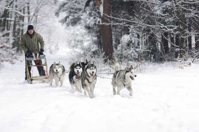 Dog Sled Races Have Joined The... is listed (or ranked) 3 on the list The Most Famous Dog Sled Race, The 1,000 Mile Iditarod, Has A Major Dark Side