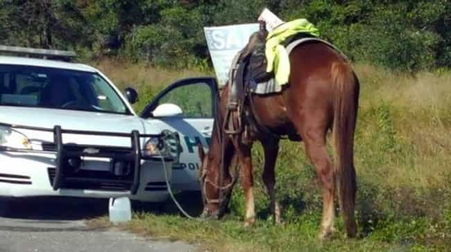 Horseback Rider Receives A DUI is listed (or ranked) 2 on the list The 18 Most WTF Florida Stories of 2017 (So Far)