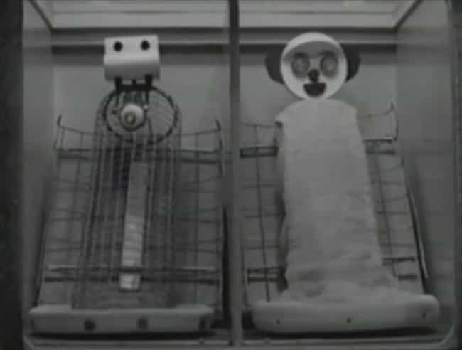 Harlow Separated Infant Monkey... is listed (or ranked) 2 on the list An Experiment Took Monkeys Away From Their Mothers To Prove, Scientifically, That Love Exists