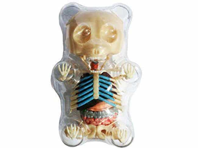 Gummy Bear Anatomical Model is listed (or ranked) 3 on the list Incredibly Bizarre Gifts That Are Certainly Not For Everybody