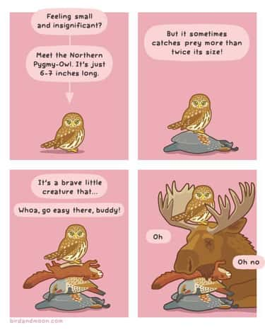 Secret Lives Of Owls is listed (or ranked) 2 on the list 20+ Nature Comics That Will Make You Laugh, Even On A Monday