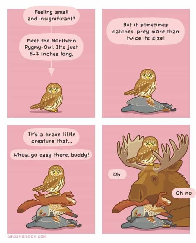 Secret Lives Of Owls is listed (or ranked) 2 on the list 21+ Nature Comics That Will Make You Laugh, Even On A Monday