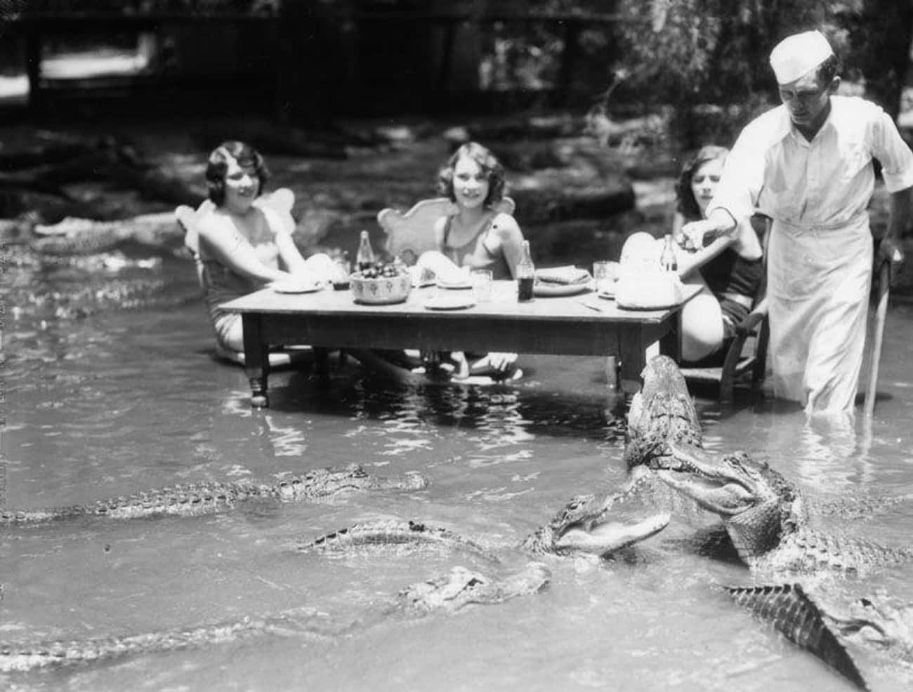 Several Women Dine Alongside T is listed (or ranked) 2 on the list A Look Inside The Mind-Bogglingly Dangerous Los Angeles Alligator Farm