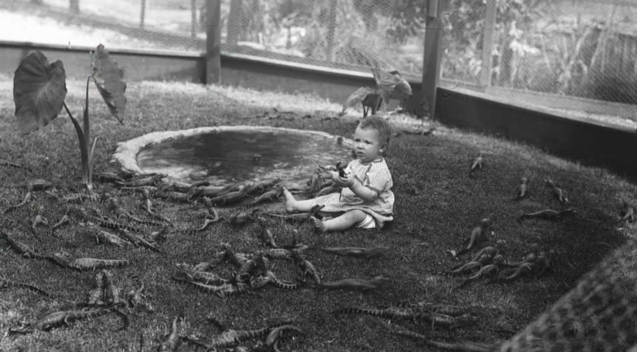 Baby Human Surrounded By A Pit is listed (or ranked) 3 on the list A Look Inside The Mind-Bogglingly Dangerous Los Angeles Alligator Farm