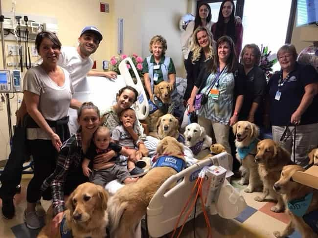 Comfort Dogs Helped Peop... is listed (or ranked) 1 on the list The Most Incredible Hero Dogs Of 2017