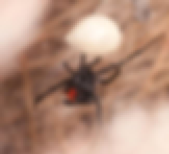 A Black Widow Spider Brought S... is listed (or ranked) 3 on the list The Deeply Unsettling And Unsolved Murder Of Dorothy Jane Scott