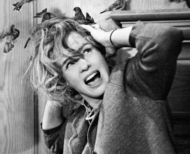 Birds Were Straight-Up T... is listed (or ranked) 4 on the list Alfred Hitchcock Had A Complicated Relationship With Tippi Hedren While Filming 'The Birds'