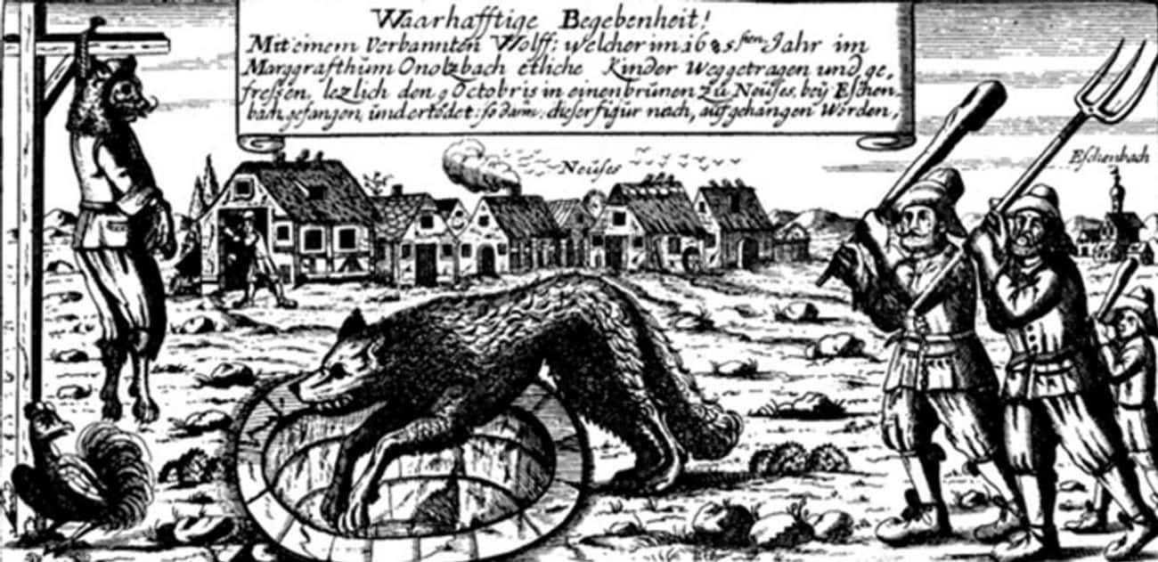 The Citizens Of Hull Organized is listed (or ranked) 2 on the list A Werewolf Has Terrorized The English Countryside For So Long Locals Gave The Beast A Nickname